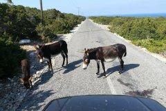 3414-924-donkeys